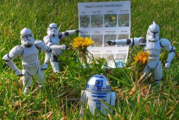 herbicidas-caseros-para-matar-las-malas-hierbas