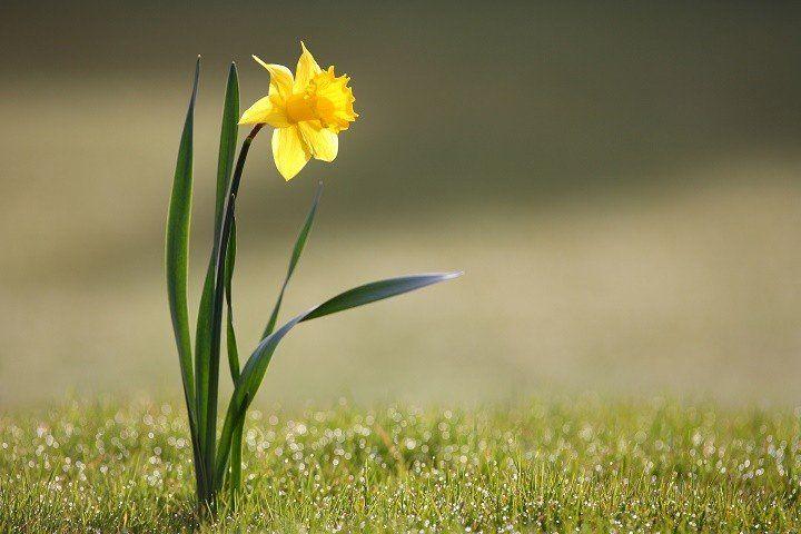 Cuáles son las flores de invierno - ElBlogVerde.com