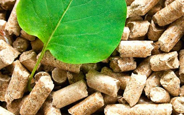 las-principales-fuentes-energia-del-mundo-energia-biomasa