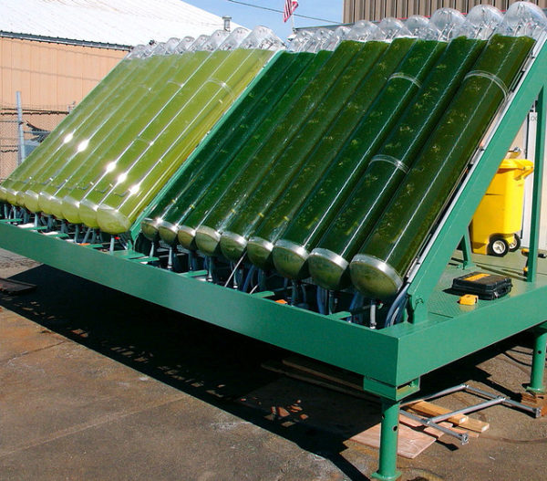 Producción de Biogas por medio de Algas