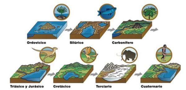 combustibles-fosiles-formacion-fosiles
