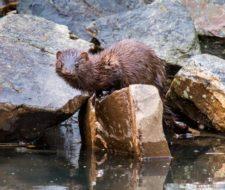 Más de 10 especies invasoras que te sorprenderán