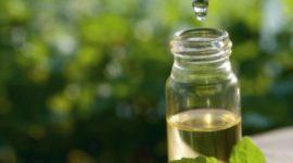 Aceite de Árbol de Té: Usos, propiedades y beneficios