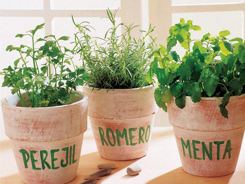 Hierbas y plantas arom ticas y medicinales para casa for Cuales son las plantas para interiores
