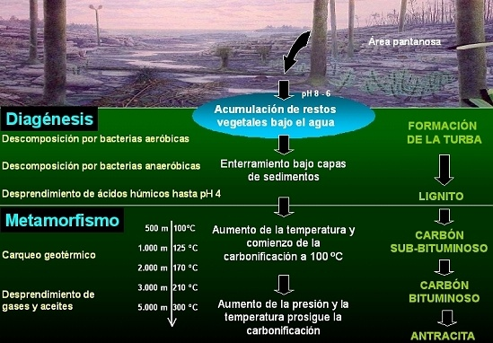 combustibles-fosiles-carbonificacion