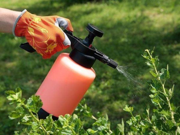 [Imagen: usos-del-peroxido-de-hidrogeno-o-agua-ox...00x450.jpg]