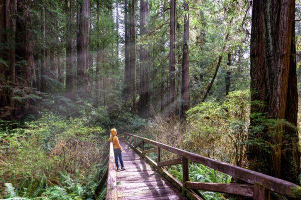 Los arboles mas magnificos del mundo sequoias anos