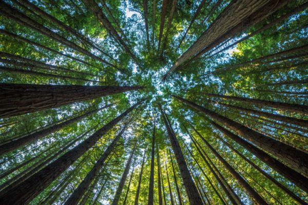 Los arboles mas magnificos del mundo sequoias curiosidades