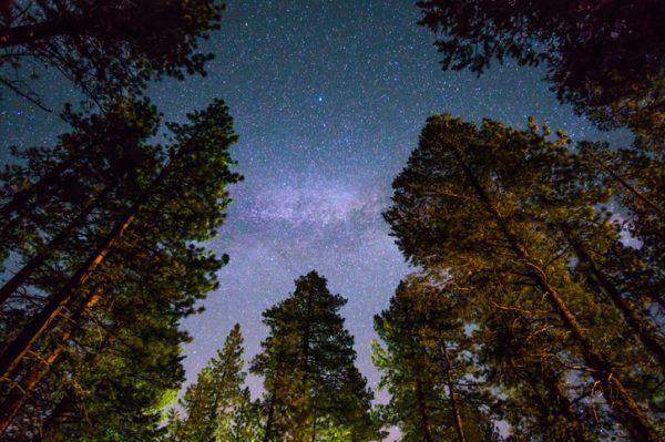 Los arboles mas magnificos del mundo sequoias