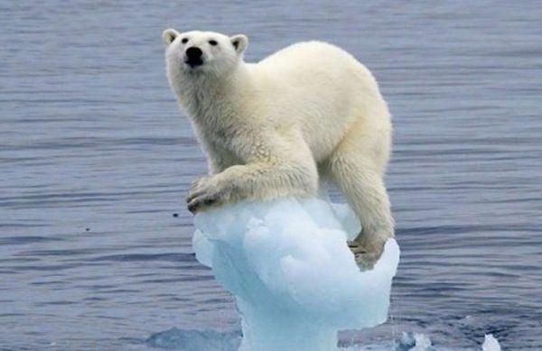 como-seria-la-tierra-si-los-glaciares-se-derritieran-oso