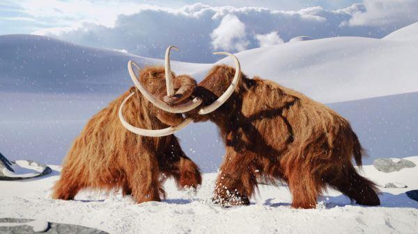 Animales que los cientificos quieren salvar y por que mamut