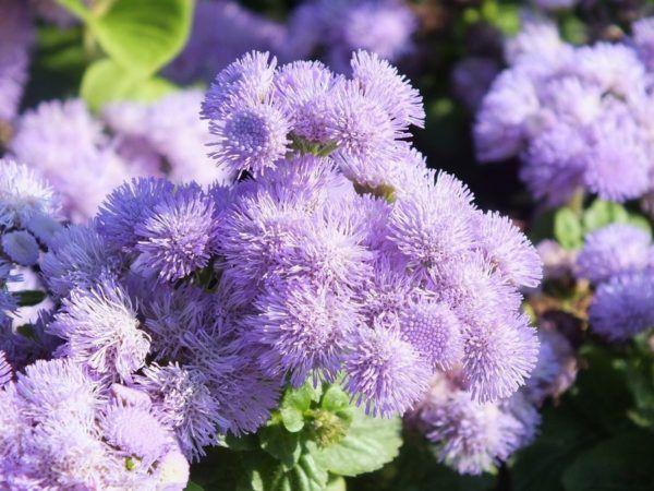 Cuales Son Las Flores De Primavera Elblogverde Com