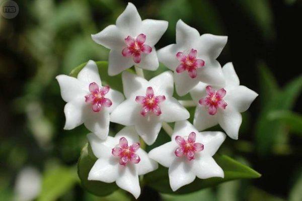 Cuáles Son Las Flores De Primavera Elblogverdecom