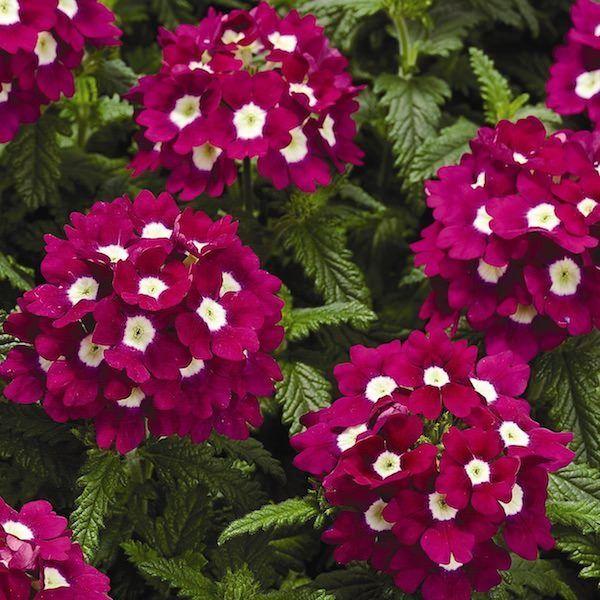Cu les son las flores de primavera - Cuales son las plantas con flores ...