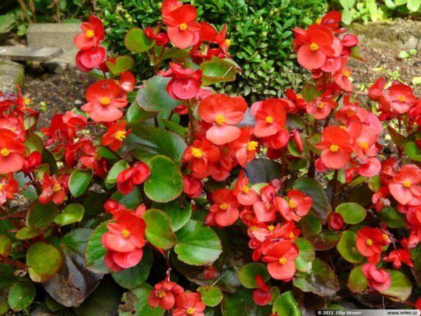 Cu les son las flores del verano - Plantas de temporada primavera ...