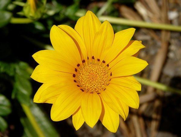 Cuales Son Las Flores Del Verano Elblogverde Com