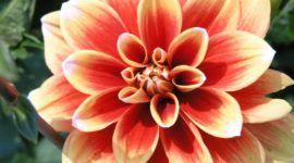 Cuáles son las flores de otoño