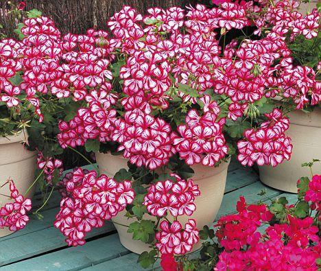 Flores Exterior Invierno. Stunning Bonitas Macetas Flores Exterior ...