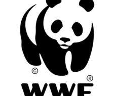 Perfil de WWF