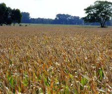 La UNESCO promueve un cambio en las políticas agrícolas