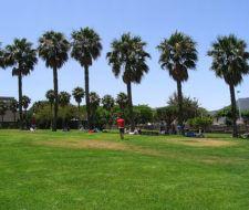 La Universidad de La Laguna crearía una oficina verde