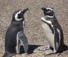 Crean el primer parque marítimo costero de Argentina