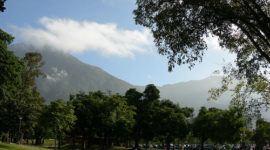 Siembran 400 árboles en el Ávila