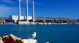 Las centrales nucleares están matando millones de peces en Estados Unidos