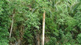 Cuba plantará más de 135 millones de árboles