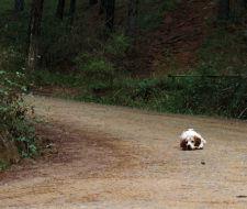 Santa Brígida sanciona a quienes abandonan animales