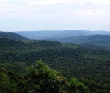 Peligran las selvas tropicales