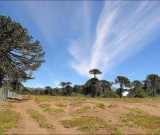 Argentina reglamenta la Ley de Bosques