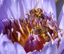 """Las abejas """"centinelas del medio ambiente"""""""
