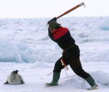 Defensores de focas detenidos en Canadá