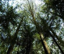 En la Plaza de Armas mexicana se construirá un laberinto ecológico