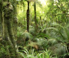 Fases y estructuras características de briofitas, pteridofitas y espermafitas