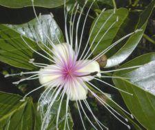 Procesos de polinización y doble fecundación de las espermafitas