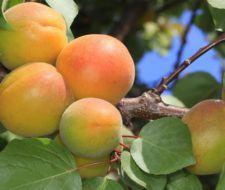 Formas de propagación de los frutos