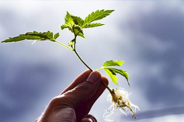 Reproduccion asexual de las plantas yahoo respuestas