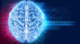 Componentes del sistema nervioso y su funcionamiento