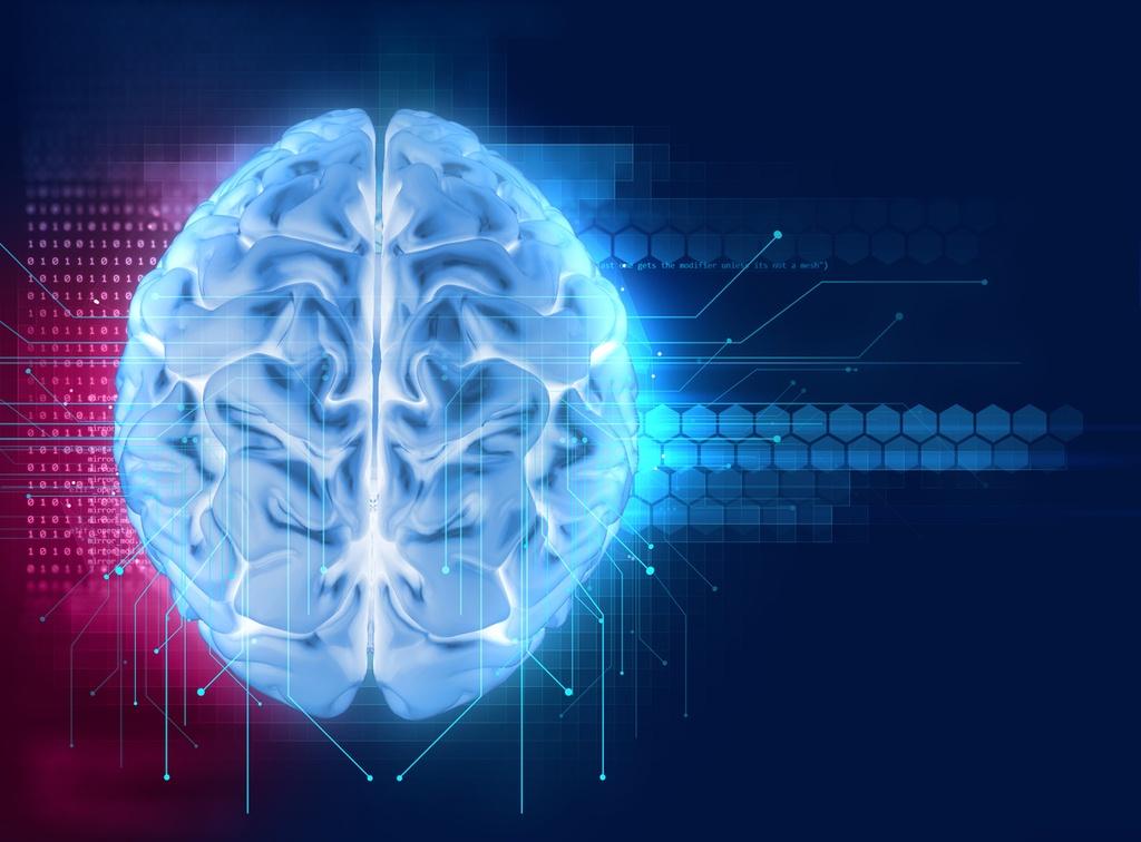Componentes del sistema nervioso y su funcionamiento ...
