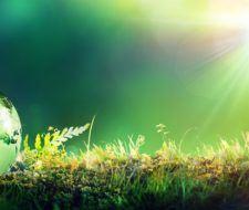 Efectos de la temperatura y de la luz en el desarrollo de las plantas