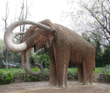 El mamut se extinguió… ¿ahora quién sigue?
