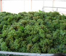 Los vinos cambian por culpa del calentamiento global