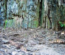 La importancia del subsuelo en la protección del medio ambiente