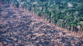 11.532 Km2 de Amazonas perdidos por tala ilegal