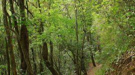 """Polémica forma de """"salvar"""" a los bosques tropicales"""