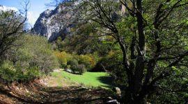 Bosques Sin Fronteras invita a conocer árboles emblemáticos