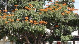 """El concurso mexicano """"Un poema al árbol"""" ya tiene ganador"""