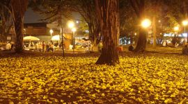 Talan árboles centenarios en Isla de Margarita